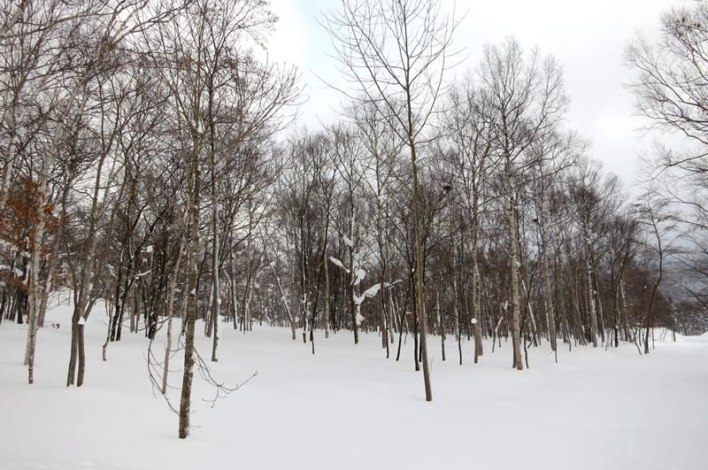 Land Near Rusutsu Ski Resort 6